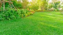 Green Grass Lawn In A Garden With Flowering Plant, Shrub, Trees And Small Random Pattern Of Grey Concrete Stepping Stone,  In Backyard Under Morning Sunshine, Good Care Landscaping In A Public Park