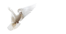 White Dove Beautifully Flies I...
