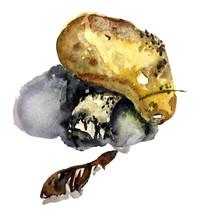 Watercolor Champignon Mushroom...