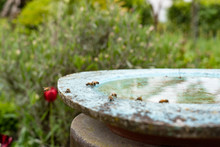 Bees Are Drinking Water At Bir...
