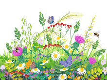 Summer Meadow Plants  And Inse...