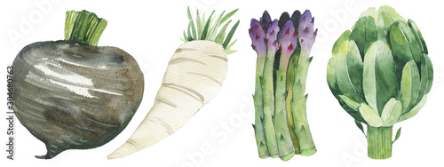 Fototapeta Watercolor painted collection of vegetables. Hand drawn fresh food design elements isolated obraz