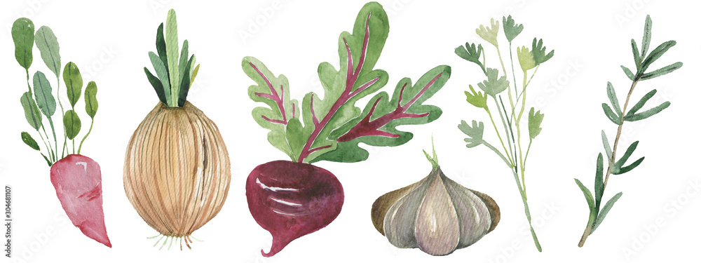 Fototapety, obrazy: Watercolor painted collection of vegetables. Hand drawn fresh food design elements isolated on white background.