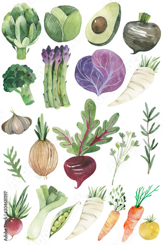 Obraz Watercolor painted collection of vegetables. Hand drawn fresh food design elements isolated on white background. - fototapety do salonu
