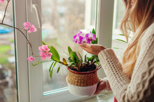 Dendrobium Orchid And Bougainvillea. Woman Taking Care Of Home Plats. Woman Holding Pot In Basket With Flowers.