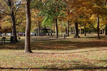 A beautiful fall scene in the park on a sunny day.