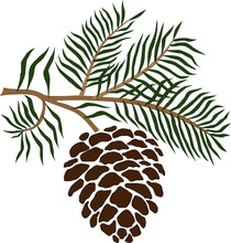 Vector Illustration Of A Pine ...