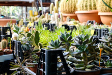 Many Plants In Pots For Sale I...