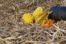 Yellow, Green And Orange Ornamental Gourds With A Large Squash