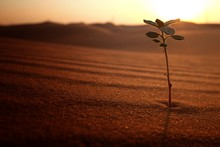 A Small Plant On A Desert Land...