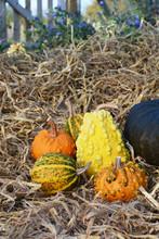 Orange, Green And Yellow Ornamental Gourds In A Rural Garden