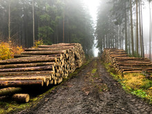 Harvested Wood In The Forest In The Czech Republic After The Forest Was Hit By A Bark