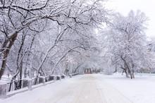 Seasonal, Winter Theme: Snow C...