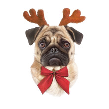 Cute Pug Dog With Reindeer Antlers And Red Bow Tie Isolated On A White Background. Dog Portrait In Christmas Costume. Animal Holiday Art Collection: Pets. Christmas And New Year Card. Design Template.