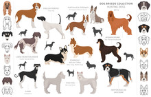 Hunting Dogs Collection Isolated On White Clipart. Flat Style. Different Color, Portraits And Silhouettes