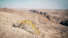 High Desert Landscape With Yel...
