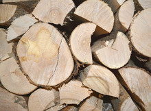 Woodpile End Of Tightly Packed Chopped Logs