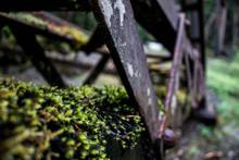 Moss On Iron Rust