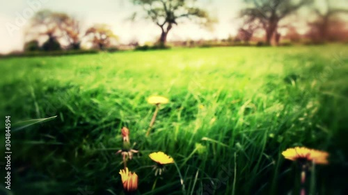 Retro Grunge Spring Meadow In The British Countryside - 304844594