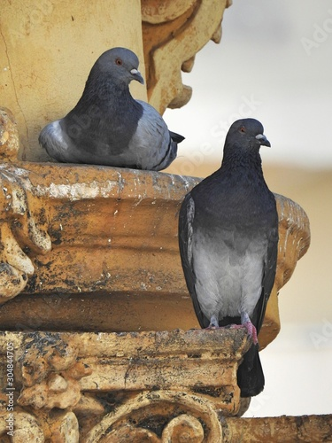Close-up of two gray pigeons perched on the architrave of an old building Wallpaper Mural