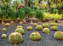 Amazing View Of  Cactus Park A...