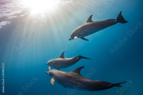 Photo Beautiful shot of cute dolphins hanging out underwater in Bimini, Bahamas