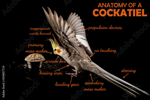 Meme, Anatomy Of A Cockatiel, sarcastic funny bird memes Canvas Print