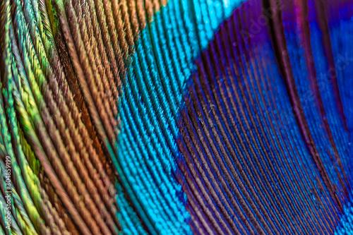 Valokuvatapetti paon texture