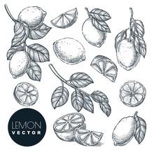 Lemon Citrus Tropical Fruits S...