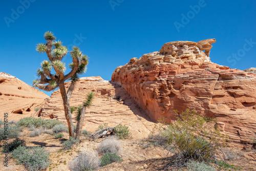 Valokuvatapetti USA, Nevada, Clark County, Gold Butte National Monument