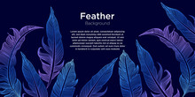 Colorful Feather Illustration Background