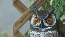 Deck Owl Hdf