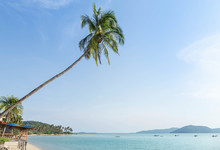 Tilted Coconut Palm Tree Lean Sloping In To The Sea Over The Tropical Beach