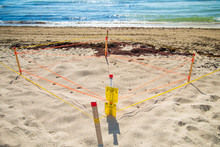 Turtle Egg Nests Cordoned Off On Miami Beach