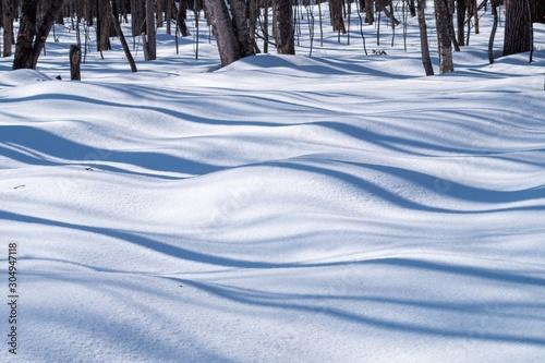 Obraz na plátně  新雪