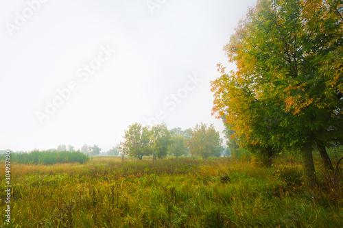 Fototapeta Several trees in field at misty sunrise obraz na płótnie