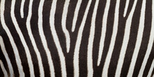 Pattern Of Zebra Skin Useful F...