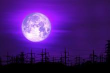 Full Milk Moon Purple Back On ...