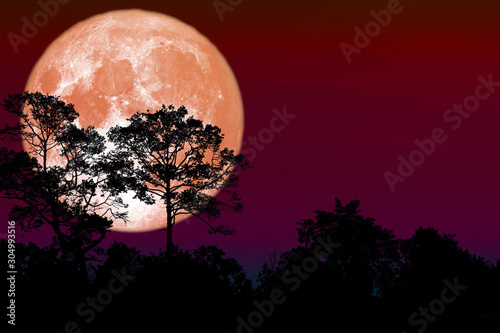 Full flower Moon back silhouette dry branch tree Wallpaper Mural
