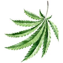 Cannabis Green Leaves. Waterco...