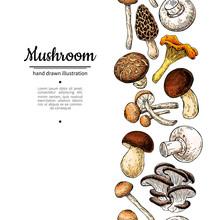 Mushroom Drawing Vector Seamlees Border. Isolated Food Frame Sketch