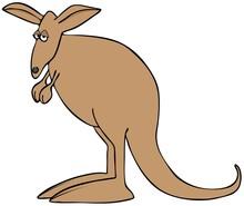 Sad Brown Kangaroo