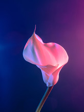 Flower And Colorful Light