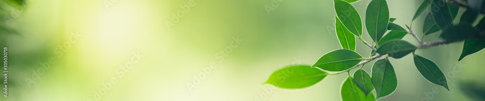 Zbliżenie natury widok zielony liść na zamazanym greenery tle w ogródzie z kopii przestrzenią dla teksta używać jako lata tła naturalnych zielonych rośliien krajobraz, ekologia, świeży okładkowej strony pojęcie. <span>plik: #305030718 | autor: Fahkamram</span>