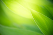 Leinwanddruck Bild - Beautiful nature view of green leaf on blurred greenery background in garden with copy space using as background natural green leaves plants landscape, ecology, fresh wallpaper concept.