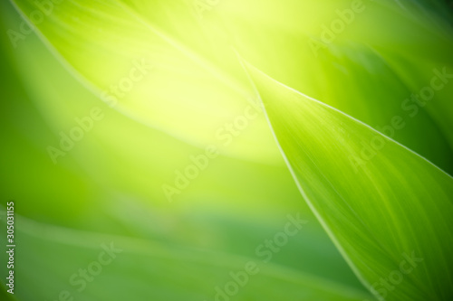 mata magnetyczna Closeup nature view of green leaf on blurred greenery background in garden with copy space for text using as summer background natural green plants landscape, ecology, fresh wallpaper concept.