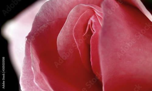 Amisha naked patel photo