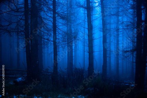 Fototapeta Blauer Nebelwald in der Nacht
