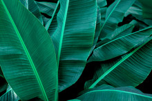 Tropical Banana Leaf Texture I...