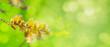 Leinwandbild Motiv blütenstaub von weidenkätzchen